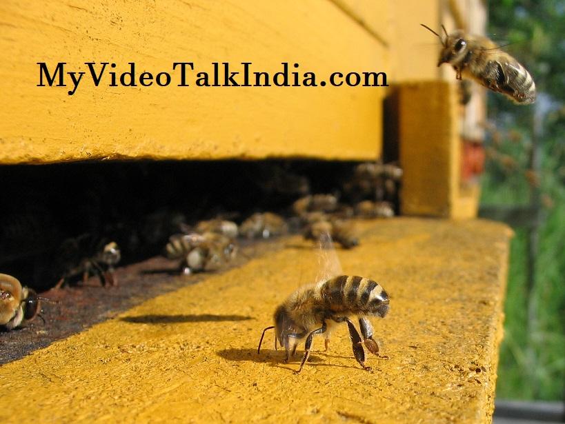 Video Hoaks Serangan Lebah Simpang Siur Antara New York dan New Delhi