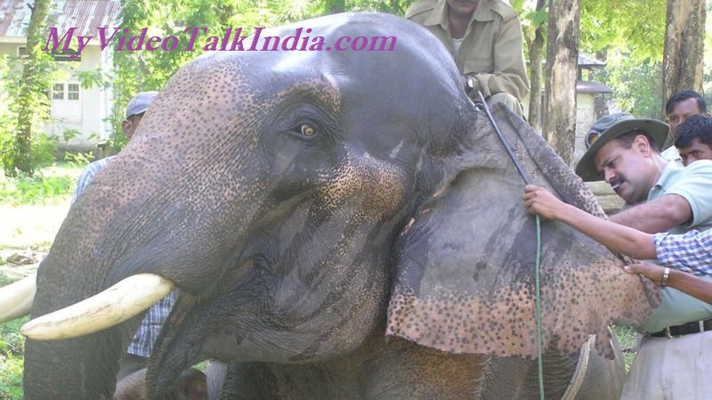 Video Pria India Menyelamatkan Gajah Berhubungan Erat Melebihi Keluarga