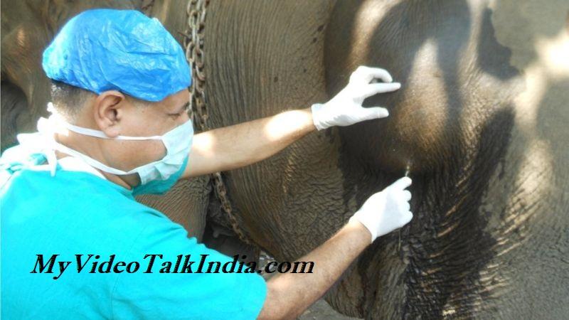 Video Pria India Menyelamatkan Gajah Memiliki Asal Usul Panjang